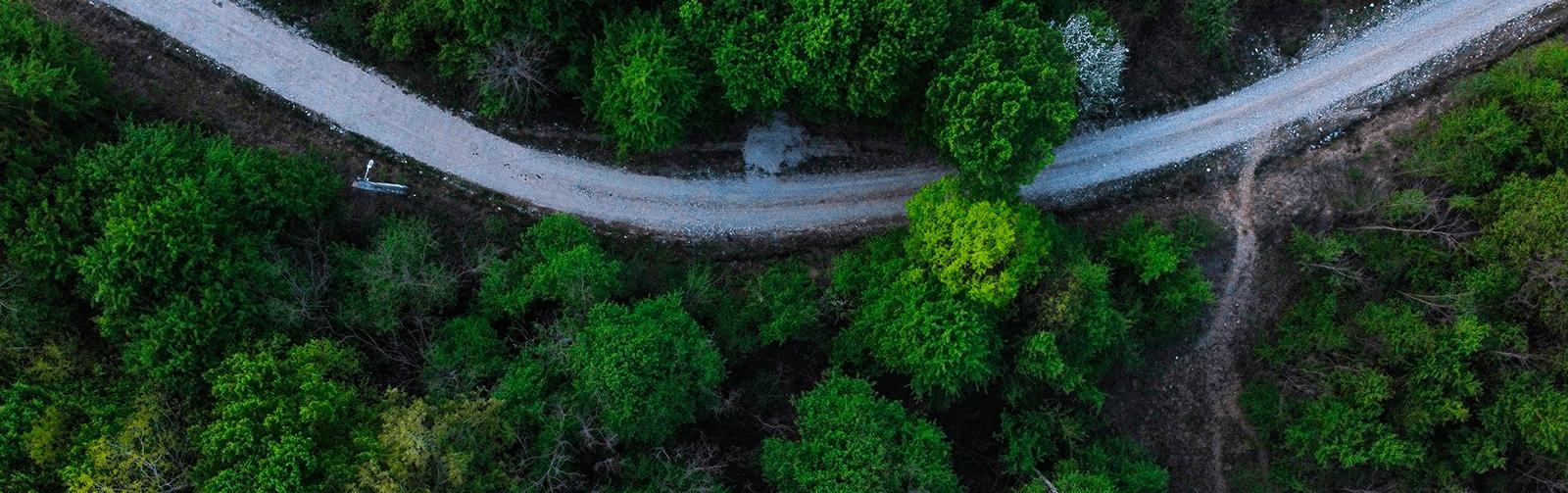 Descubre el bosque idoneo